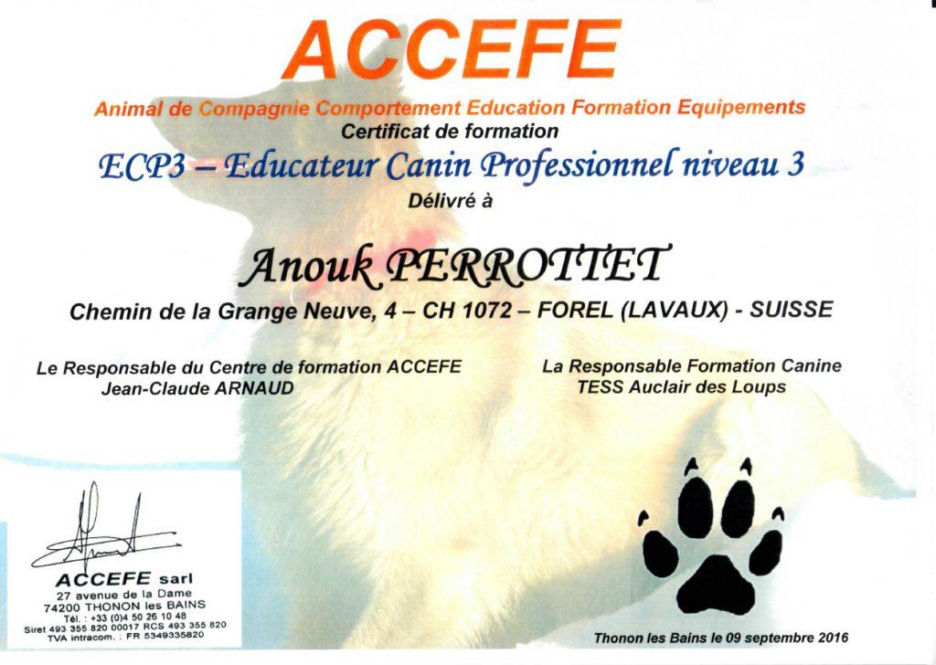 Certificat en formation - Educateur Canin Professionnel niveau 3