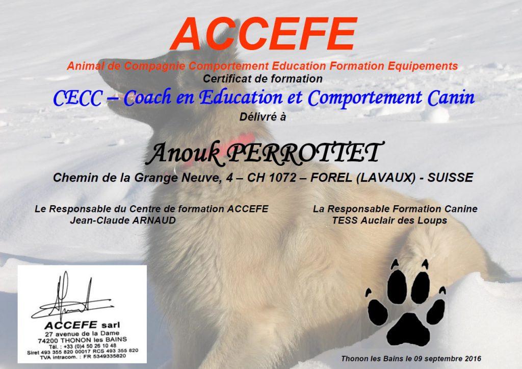 Certificat en formation - Coach en Education et Comportement Canin