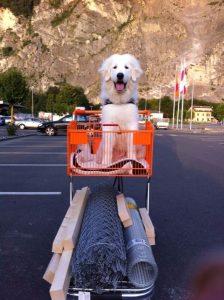 Gérer son chien en ville